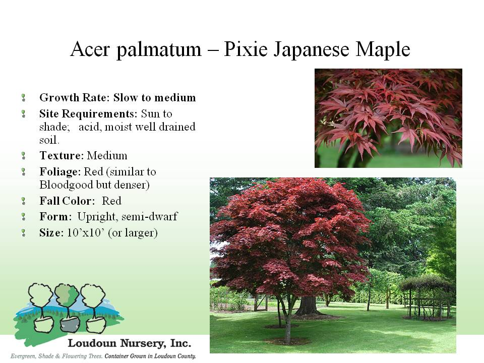 Index Of Tree